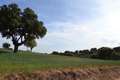 Naturaleza de Palacios del Pan