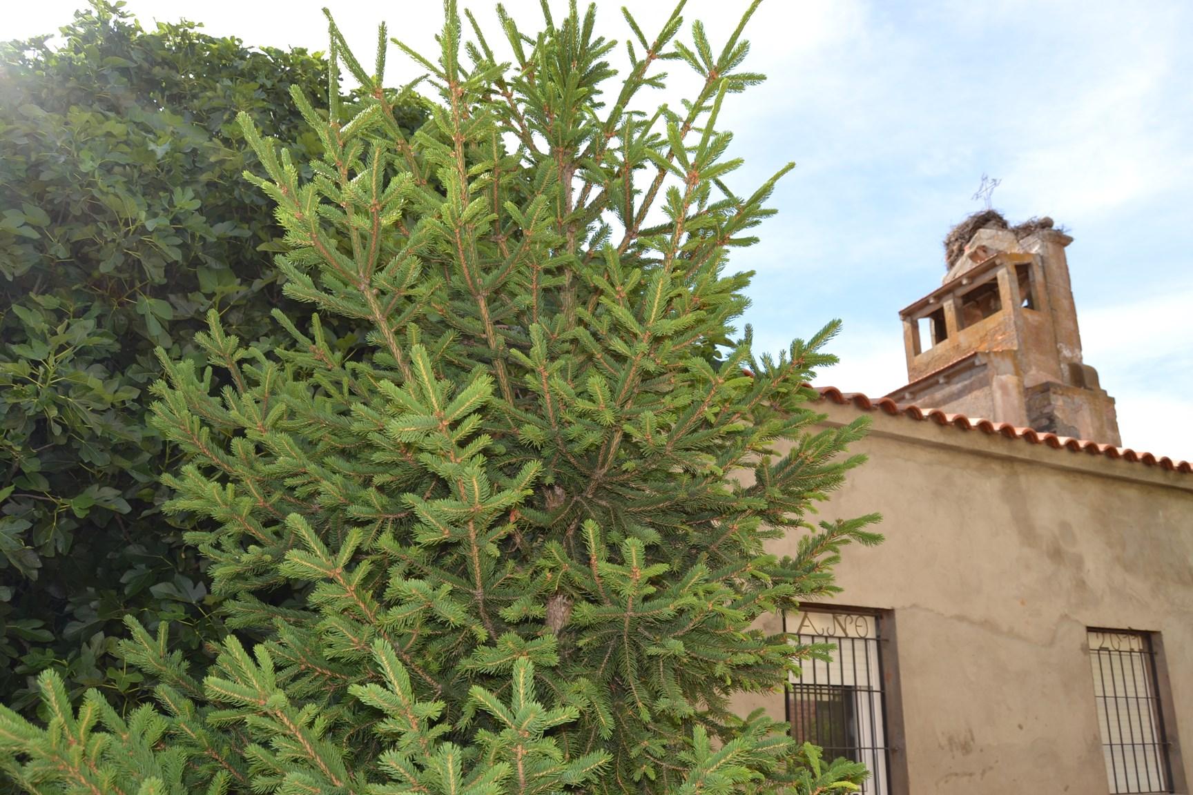exterior de la Iglesia de Santa Eulalia